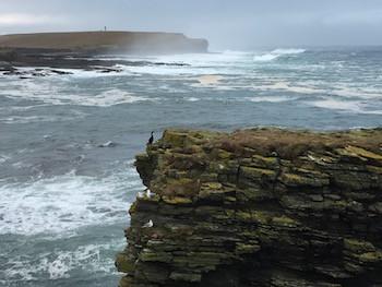 Wild seas and birds on whalebone path