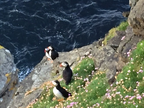 July Puffins