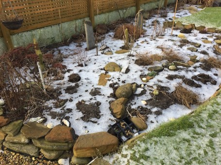 Snow on Daisy bed 700