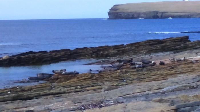 Spring Seals