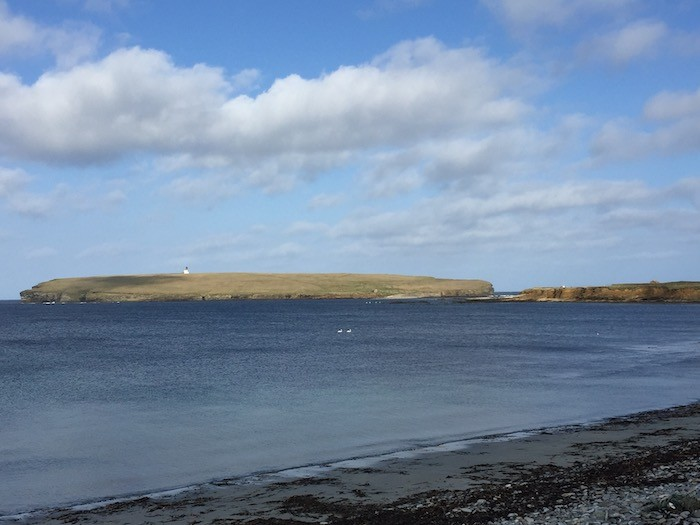 Swans enjoying the romance of Birsay bay Orkney